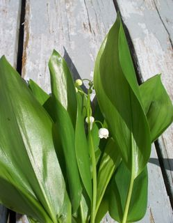 spring gift